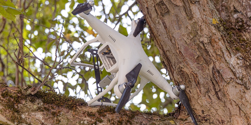 drone nuisance stuck in tree