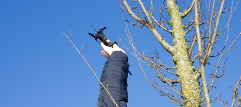 drone removed from tree by a hand
