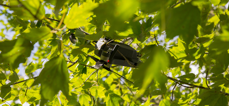 drone stuck among leaves and branches