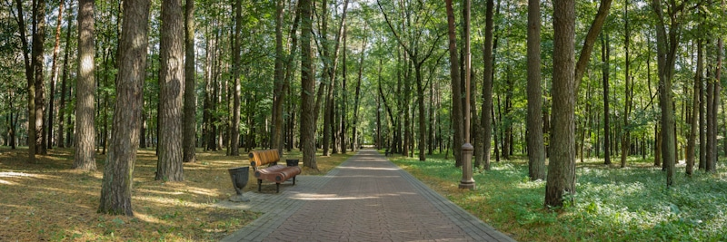 public park green central pathway with bench