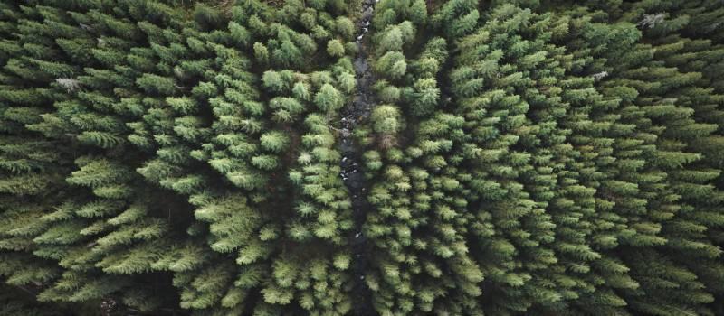 treesfilmedbydrone